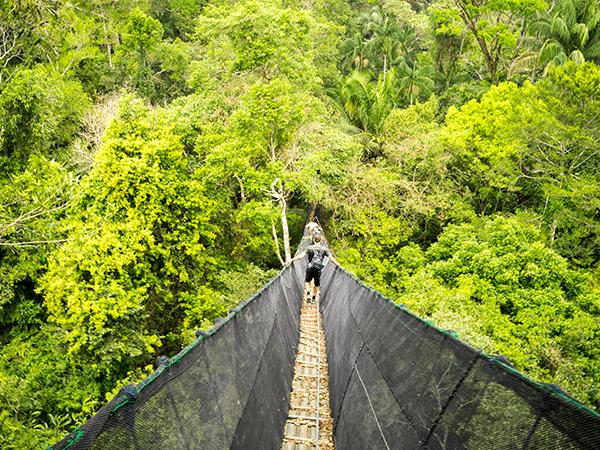 Tambopata Canopy Walkways Activity