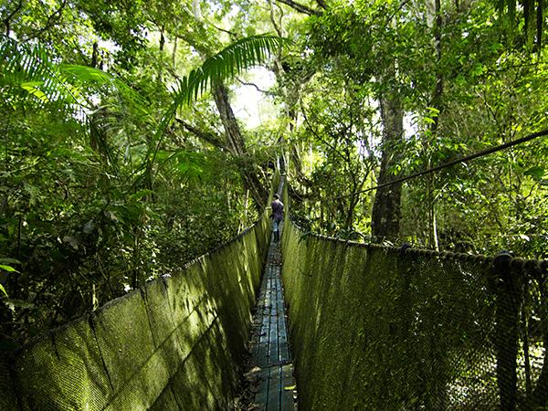 Tambopata Canopy Walkways Activity 2