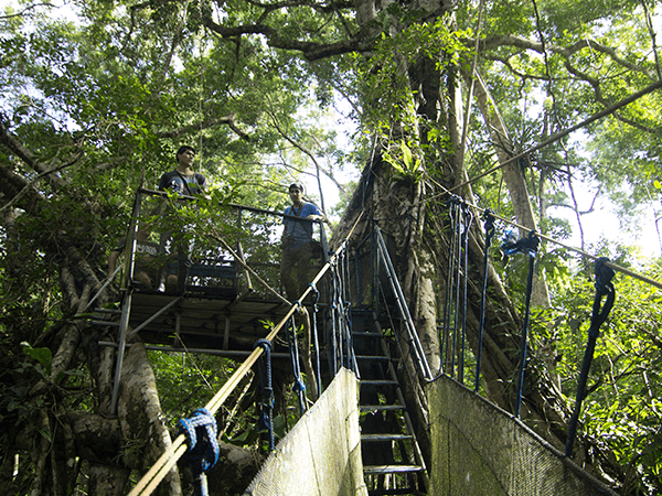 Tambopata Canopy Walkways Activity 3