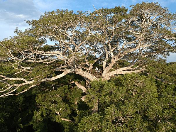 Tambopata Canopy Acivity